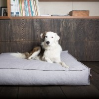 Matelas orthopédique pour chien - Matelas Orthopédique anti-tâche Stargaze Fantail