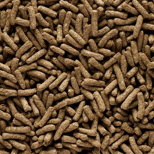 Aliment pour rongeur - Complete - Cavia Adult pour rongeurs