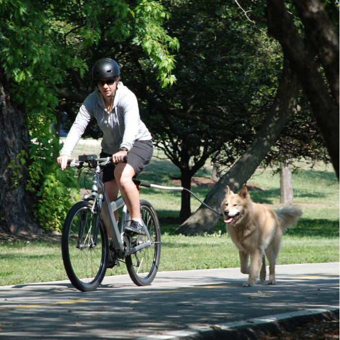Collier, laisse et harnais - Attache pour vélo Cycleash pour chiens