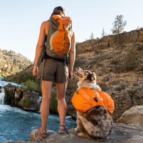 Collier, laisse et harnais - Sac de bât Approach pour chiens