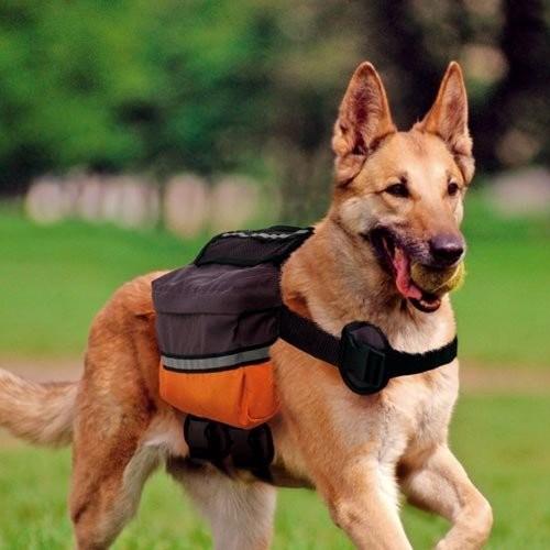 sac dos pour chien dog scout sacoche pour chien ferplast wanimo. Black Bedroom Furniture Sets. Home Design Ideas