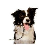 Marche en laisse / Education du chien - Licol Halti
