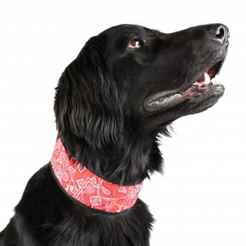 Collier, laisse et harnais - Collier rafraîchissant rouge pour chiens