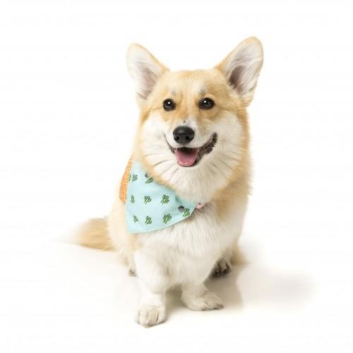 Collier, laisse et harnais - Bandana Tucson pour chiens