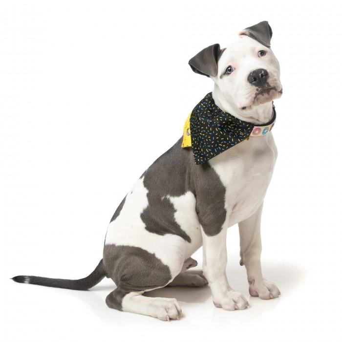 Collier, laisse et harnais - Bandana Monkey Mania pour chiens