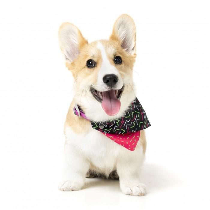 Collier, laisse et harnais - Bandana Juicy pour chiens