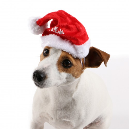 Collier, laisse et harnais - Bonnet de Noël pour chiens