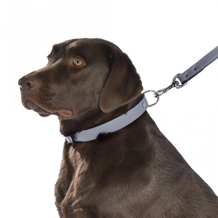 Collier, laisse et harnais - Collier Tomy - Gris pour chiens