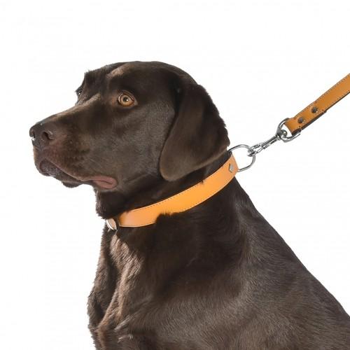 Collier, laisse et harnais - Collier Tomy - Moutarde pour chiens