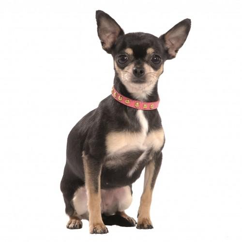 Collier, laisse et harnais - Collier Little pour chiens