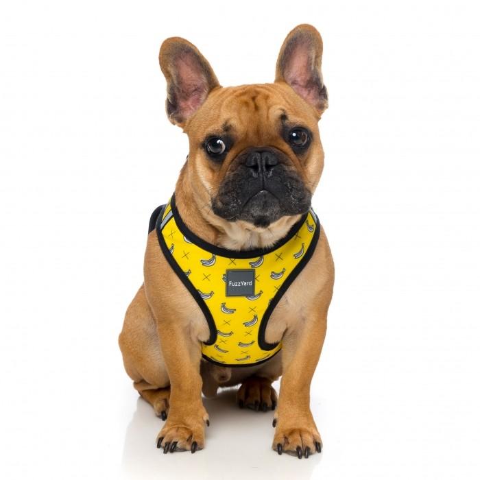Collier, laisse et harnais - Harnais Step-in - Fins de série pour chiens