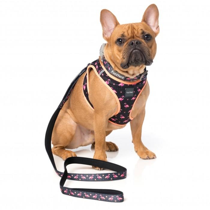 Collier, laisse et harnais - Collier Fabmingo pour chiens