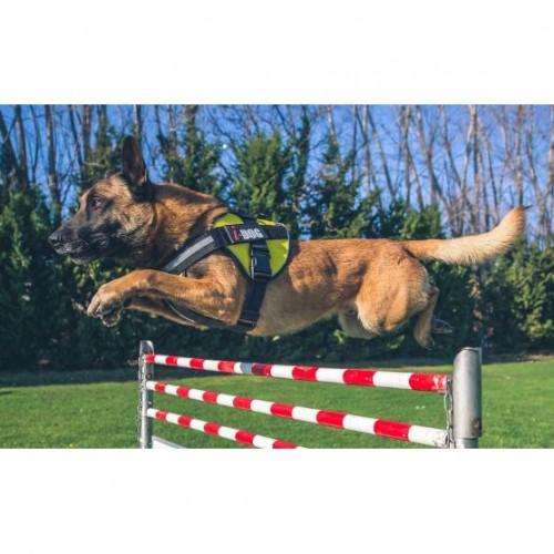 Collier, laisse et harnais - Harnais NeoCity pour chiens