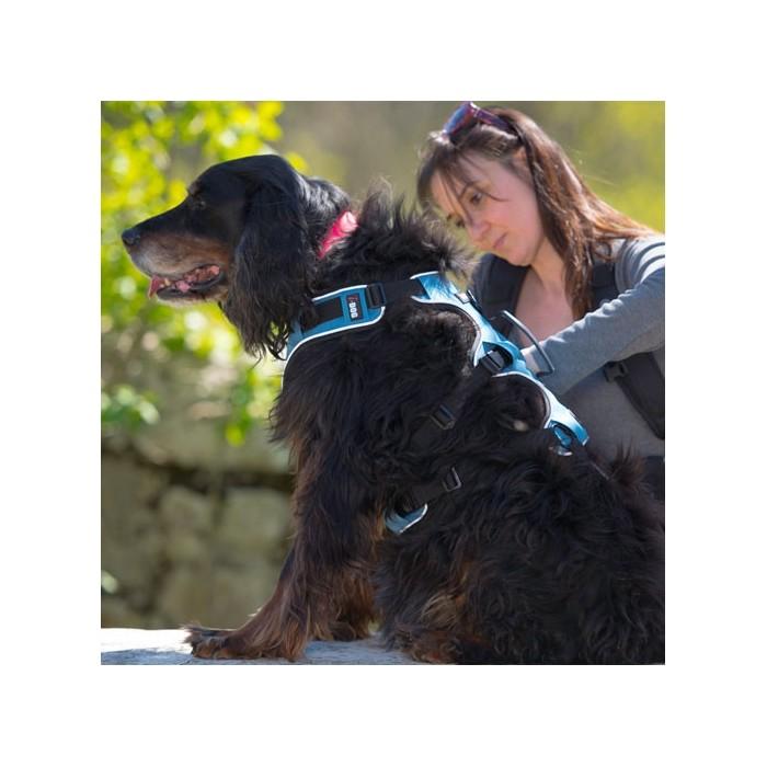 Collier, laisse et harnais - Harnais canicross pour chiens