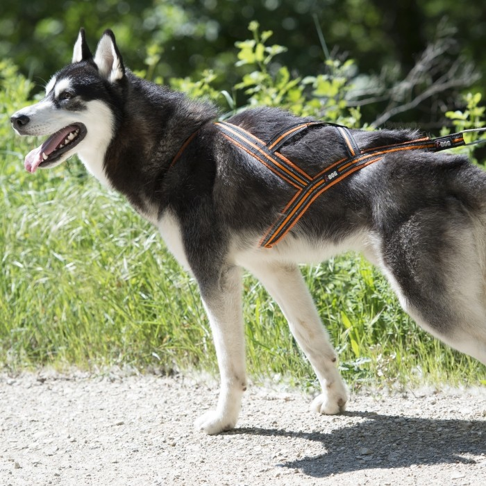 Collier, laisse et harnais - Ceinture Canicross One pour chiens