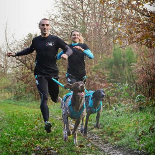 Collier, laisse et harnais - Harnais Canicross X-Back Phoenix pour chiens