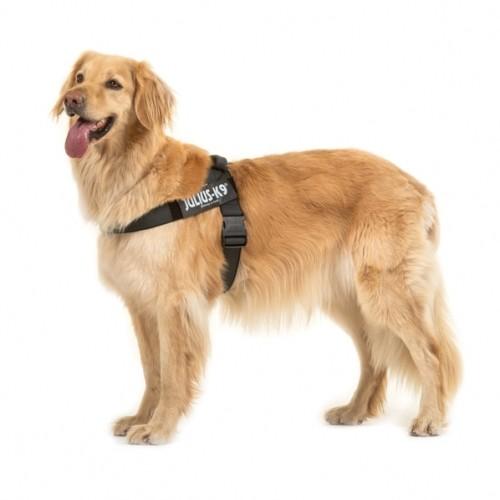 Collier, laisse et harnais - Harnais IDC Belt Color & Gray Noir pour chiens