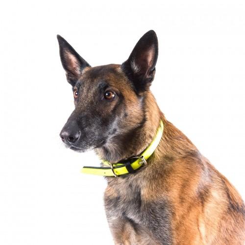 Collier, laisse et harnais - Collier IDC Lumino - Noir pour chiens