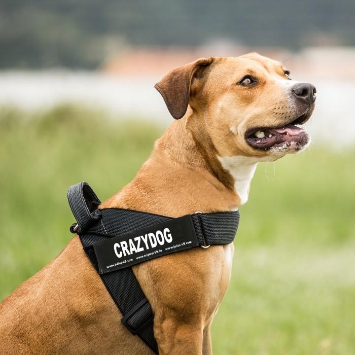 Collier, laisse et harnais - Scratch pour harnais - T.L pour chiens
