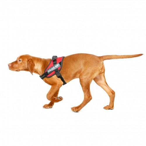 Collier, laisse et harnais - Harnais IDC Power Rouge pour chiens
