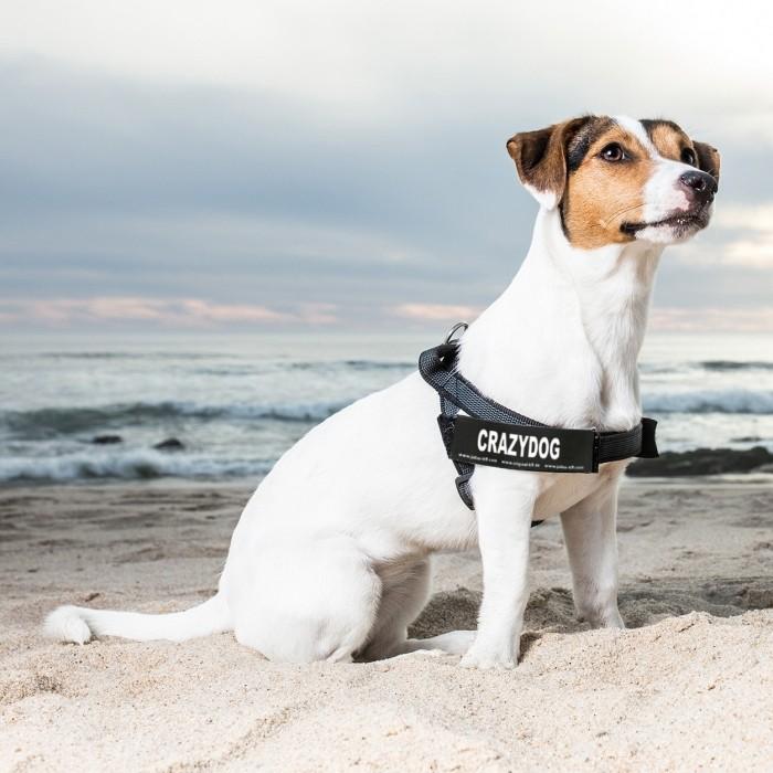 Collier, laisse et harnais - Scratch pour harnais - T.S pour chiens