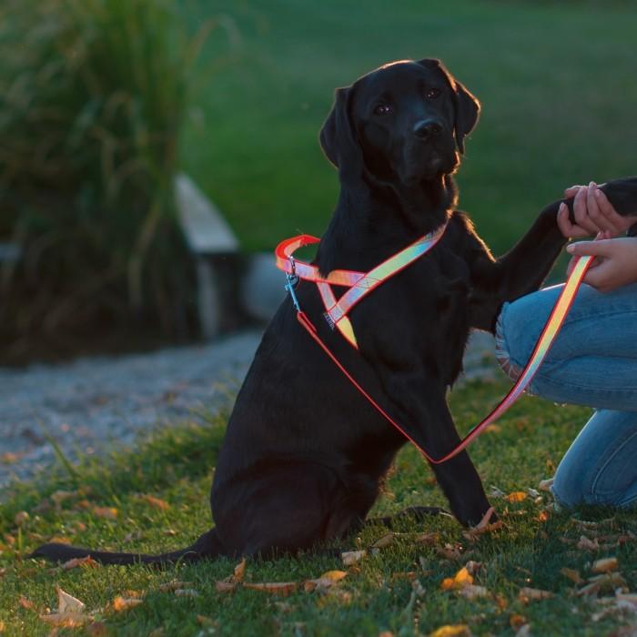 Sécurité et protection - Laisse réfléchissante pour chiens