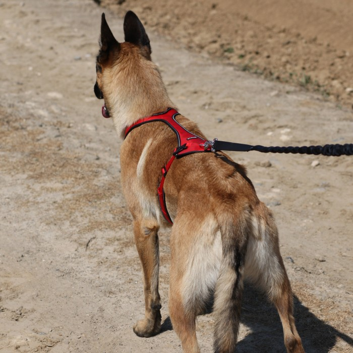 Collier, laisse et harnais - Harnais de traction Otium pour chien pour chiens