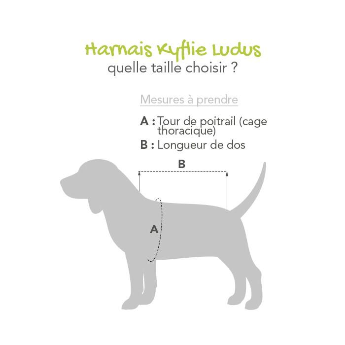 Collier, laisse et harnais - Harnais de traction Ludus pour chien pour chiens