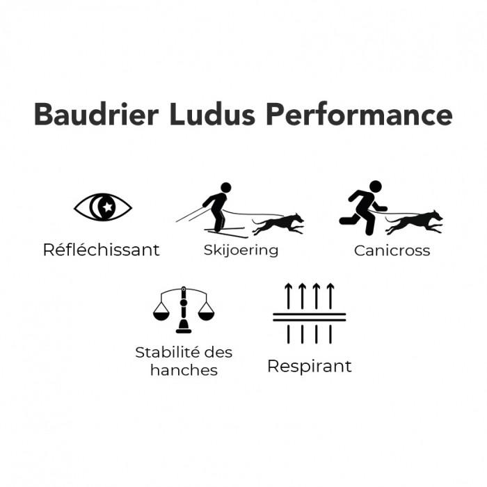 Collier, laisse et harnais - Baudrier Ludus Performance pour chiens