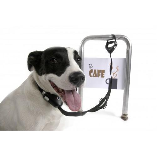 Collier, laisse et harnais - Laisse verrouillable Safespot pour chiens