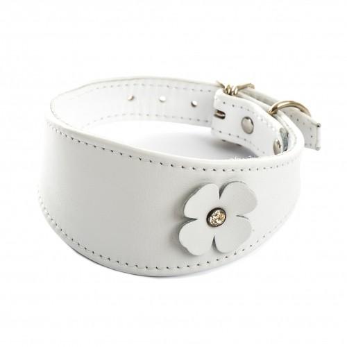 Collier, laisse et harnais - Collier Trèfle pour lévrier - Blanc pour chiens