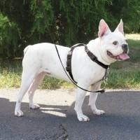 Harnais pour chien - Harnais EasyWalk 3 en 1 Petsafe
