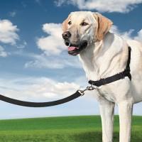 Marche en laisse / Education du chien - Harnais Easy Walk™  PetSafe