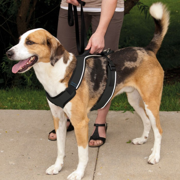 Collier, laisse et harnais - Harnais EasySport  pour chiens