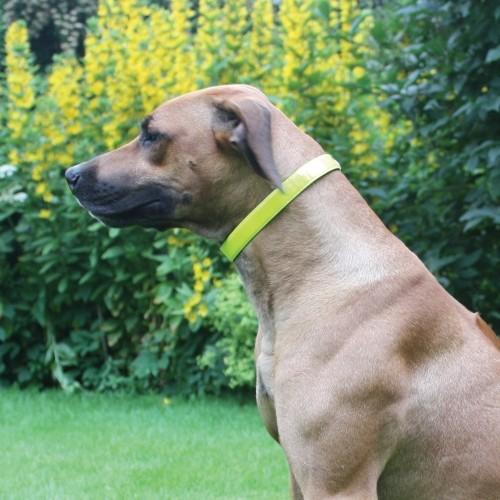 Collier, laisse et harnais - Collier Haute Visibilité pour chiens