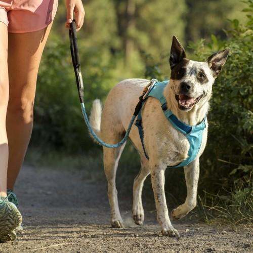 Collier, laisse et harnais - Fin de série Harnais Hi & Light pour chiens