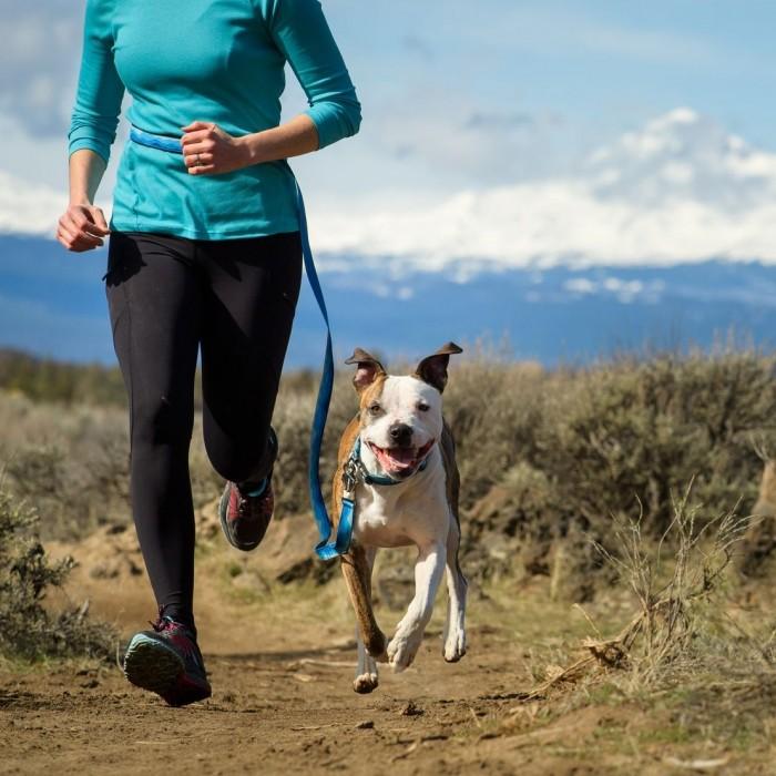 Sports Canins - Laisse Flat Out pour chiens