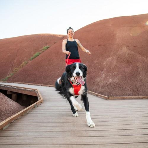 Collier, laisse et harnais - Harnais Front Range - Rouge pour chiens