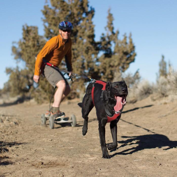 Collier, laisse et harnais - Ceinture baudrier Omnijore pour chiens