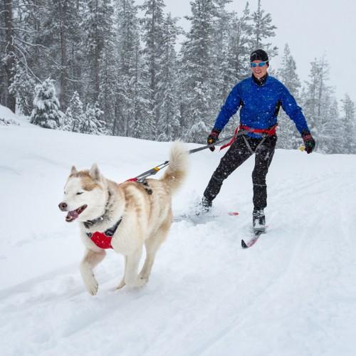Collier, laisse et harnais - Harnais Omnijore Dog pour chiens