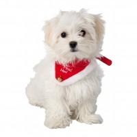 Accessoire pour chien et chat - Bandana de Noël Trixie