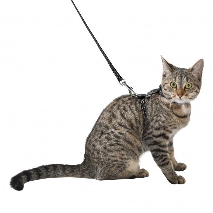 Collier, laisse et harnais - Pack chaton Safe pour chats