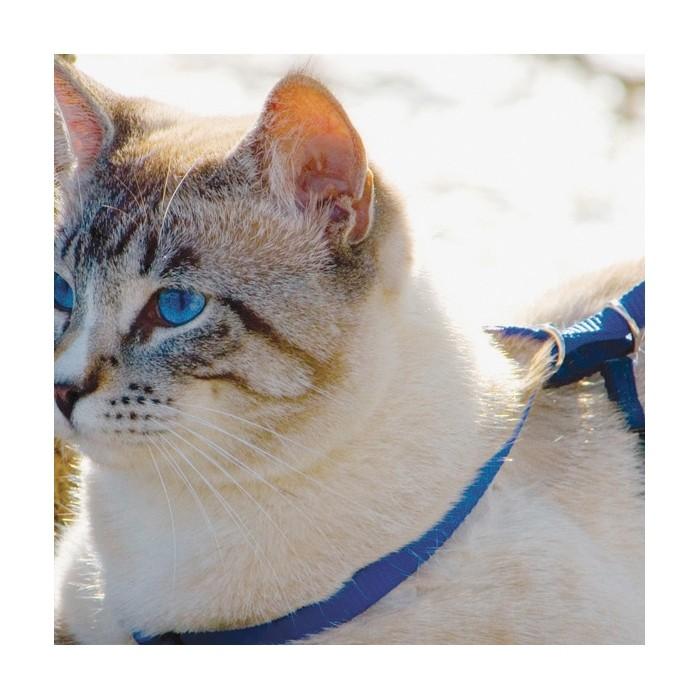 Collier, laisse et harnais - Parure harnais et laisse Easy Walk pour chats