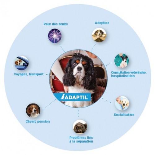 Comportement éducation - ADAPTIL® Express pour chiens
