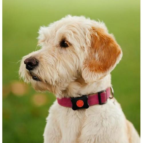 Collier, laisse et harnais - Boîtier connecté capteur d'activité pour chiens