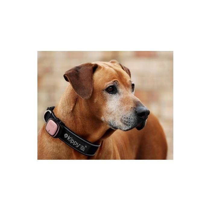 Sécurité et protection - GPS et moniteur d'activité EVO pour chiens