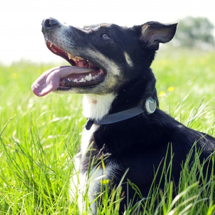 Comportement éducation - Traqueur d'activité Animo pour chiens