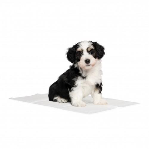 Tapis éducateur pour chien - Tapis éducateur Basic Savic