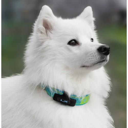 Comportement éducation - Capteur d'activité Motion Pet Activity Tracker pour chiens