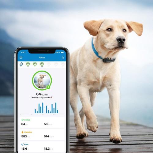 Sécurité et protection - Traceur GPS pour chien pour chiens
